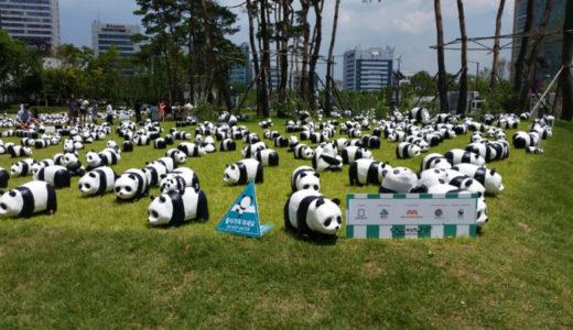 【韓国生活】チャムシルでパンダ