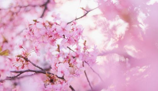 【韓国留学】韓国に留学するならどっちがいい?ソウルと地方