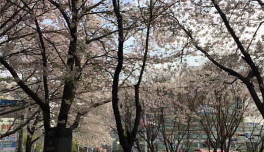 【韓国生活】可愛い看護婦さんにお尻ペンペンされた話(2回目)